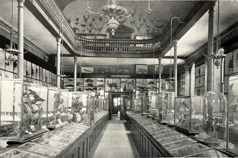 The Natural Histoy Museum